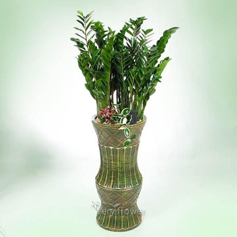 영광의 금전수 (중급) 개업선물 기념일 꽃배달 꽃선물