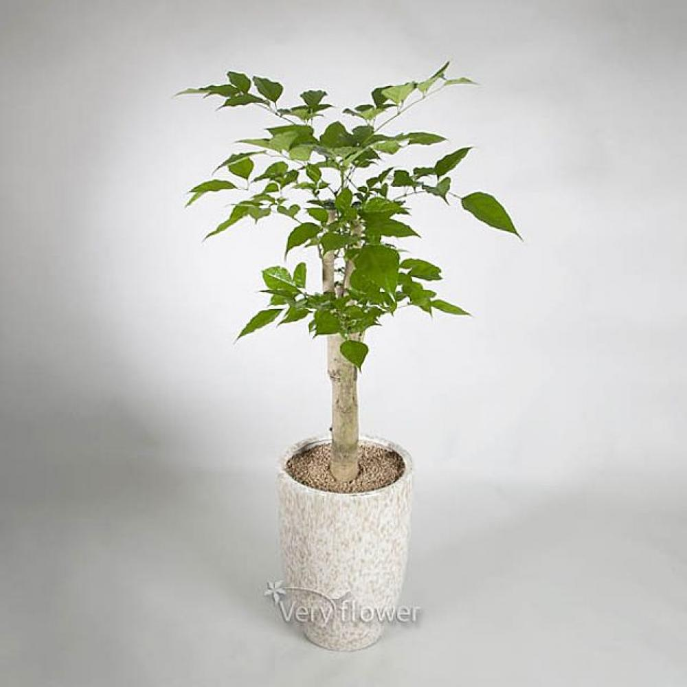 녹보수 사기분(기본) (중급) 기념일 꽃배달 선물