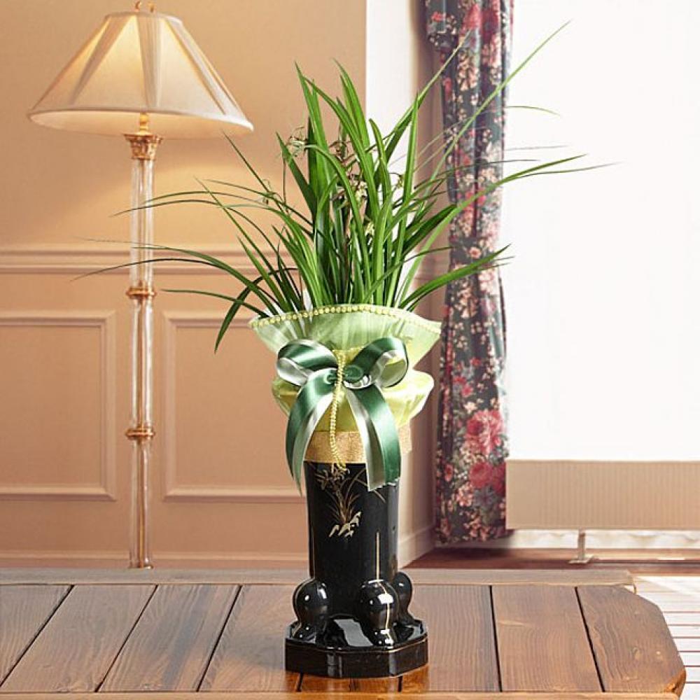 한란 (중급) 개업선물 기념일 꽃배달 꽃선물