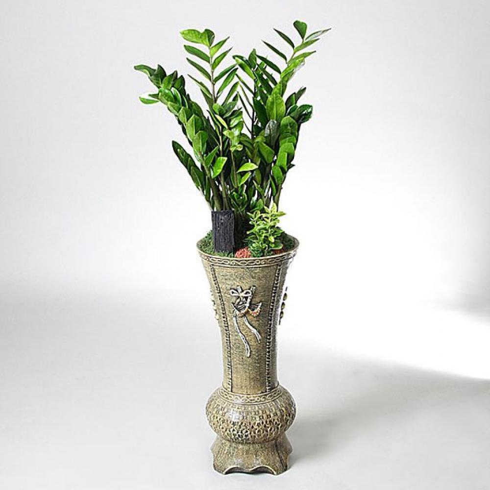 용궁 금전수 (중급) 개업선물 기념일 꽃배달 꽃선물